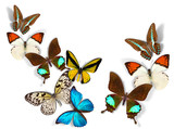 group of butterflies