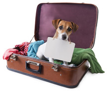 Dog In A Suitcase With A Tablet Where You Can Place Your Text