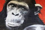 Fototapeta Młodzieżowe - chimpanzé graffiti 0527f
