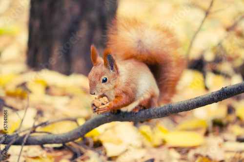 Deurstickers Eekhoorn Squirrel in autumn park