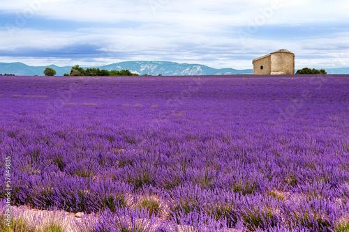 Foto op Aluminium Snoeien Lavender field in the South of France