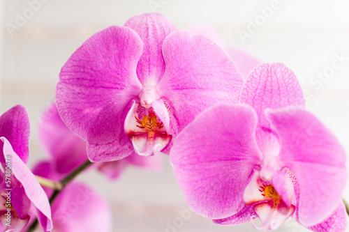 violet orchid flower