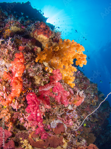 Fototapety, obrazy: Colorful coral reef