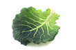 canvas print picture - Savoy Cabbage Leaf