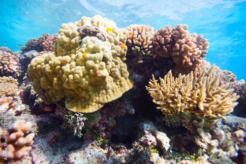 Keuken foto achterwand Onder water Coral reef
