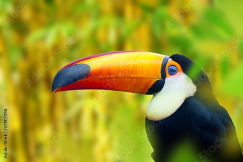 Tuinposter Toekan Colorful Toucan Bird
