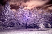 Stunning False Color Infrared Forest Landscape Image