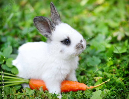 Fotografie, Obraz  Funny baby white rabbit with a carrot in grass