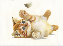 Watercolor Animal Collection: ...