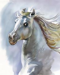 FototapetaWhite horse