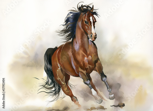 Fototapeta Running horse obraz