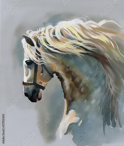 Fototapeta White horse obraz