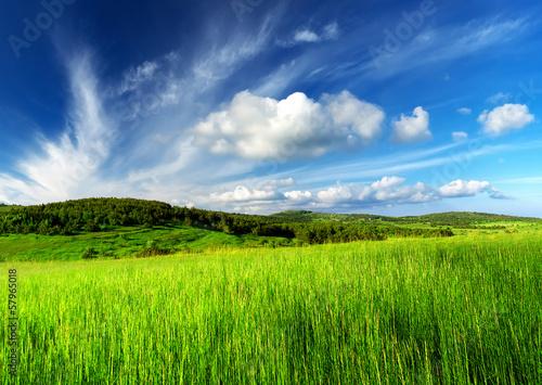 In de dag Lime groen Field and cloudy sky. Beautiful summer landscape
