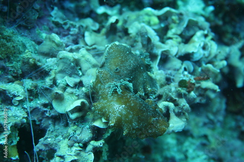 Photo  Mediterranean sea slug Marseille