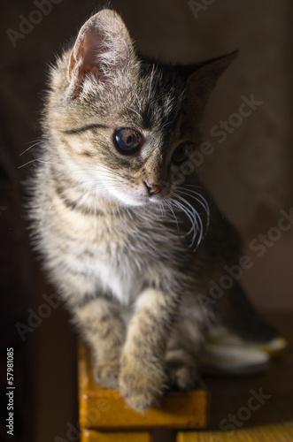 Fototapety, obrazy: small striped kitten