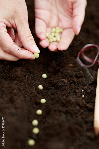 Stampa su Tela Garden, sowing - woman sowing seeds into the soil