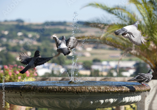 Poster  Fontaine aux pigeons