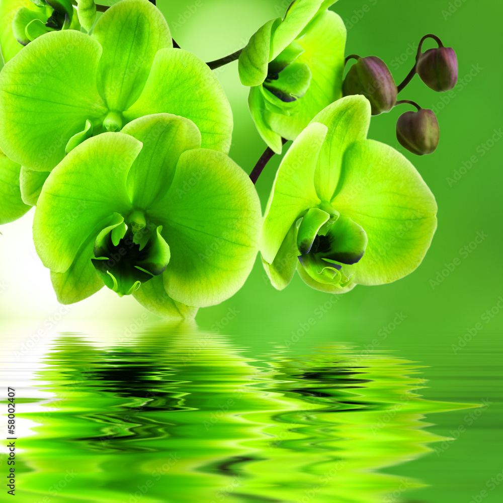 Fototapeta natural floral background, spa concept