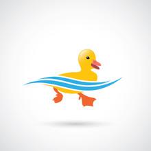 Little Duck Swimming