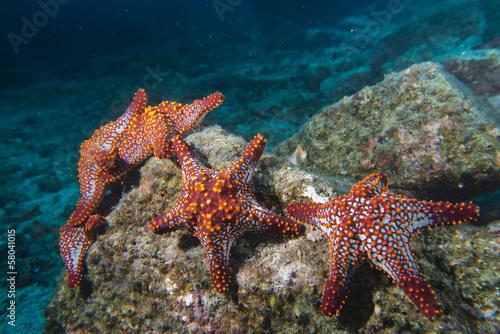 gwiazdy-morskie-w-rafie-kolorowy-podwodny-krajobraz