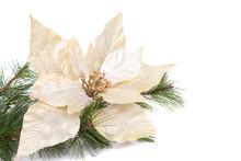 A White Christmas Poinsettia