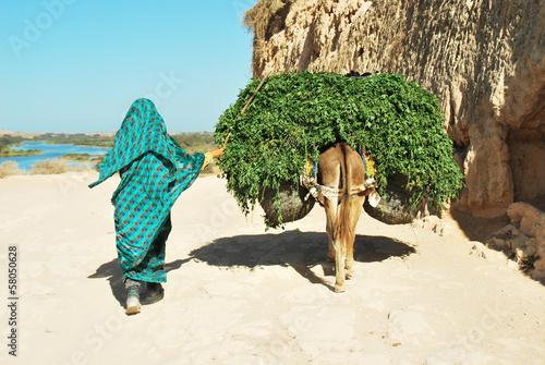 Recess Fitting Morocco Trasporto ad Asino