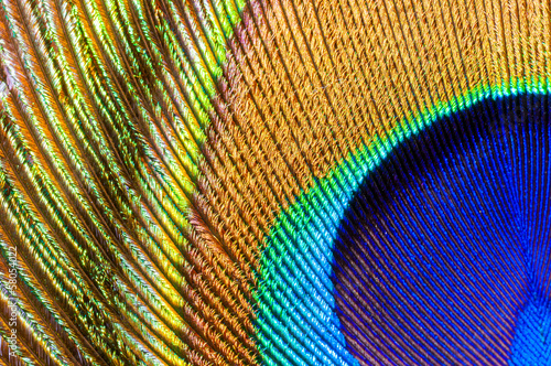 Foto op Plexiglas Pauw peacock feather closeup