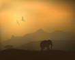 Elephants Rhinos in the wild