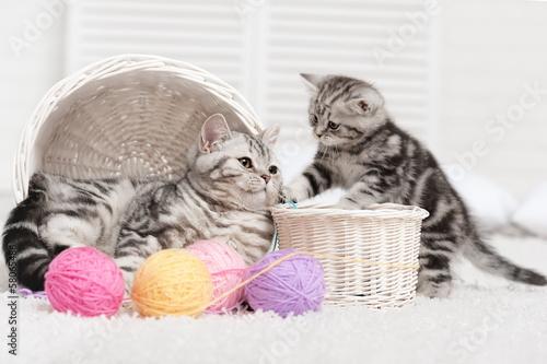 Dwa koty w koszu z kulkami przędzy