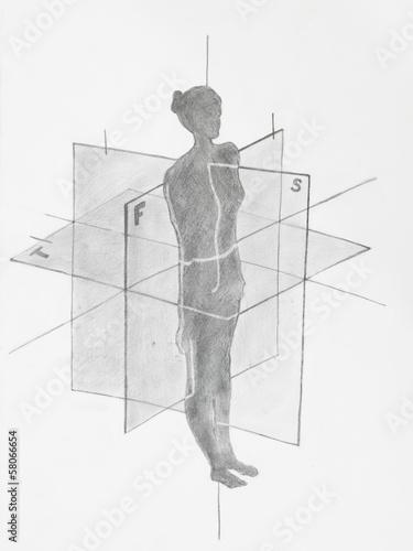 Fotografie, Obraz Detail of women anatomical planes