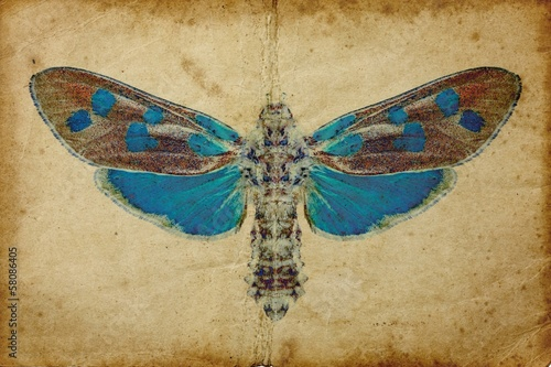 Garden Poster Butterflies in Grunge Grunge background