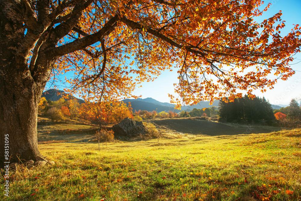 Fototapety, obrazy: Jesienny krajobraz