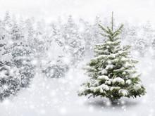 Tannenbaum In Schönem Schneefall