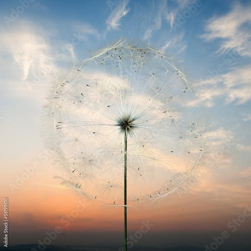 Foto op Plexiglas Macrofotografie dandelion