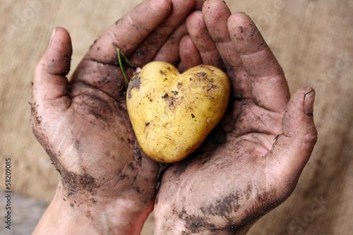 Fotografie, Obraz  Aus Liebe zur Landwirtschaft
