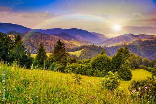 Staande foto Zalm pine trees near valley in mountains and autumn forest on hillsid