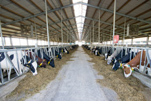 Interior Of Modern Holstein Fr...