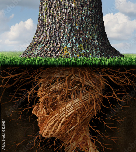 Foto Take Root