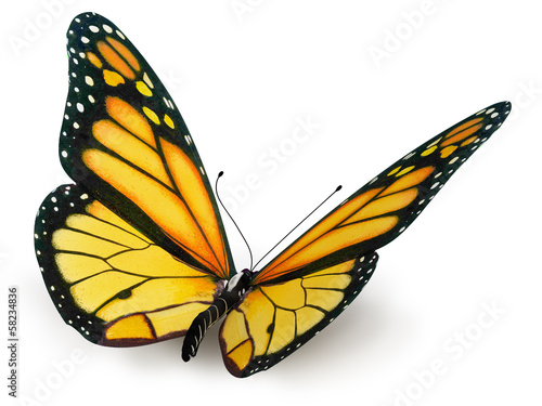 Fotografie, Obraz  butterfly