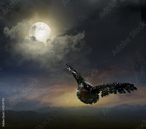 Photo Stands Full moon owl in the night sky.