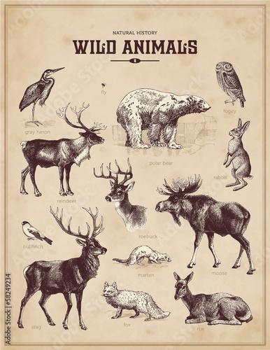 Photo  wild animals