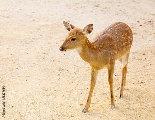 Foto op Aluminium Ree Female roe deer