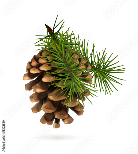 Fotografie, Obraz  Pine cone with branch