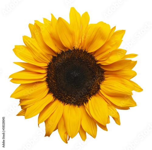 Deurstickers Zonnebloem Sun Flower