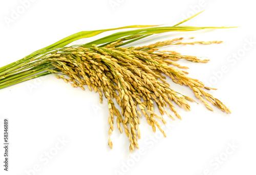 Fototapeta paddy rice seed.
