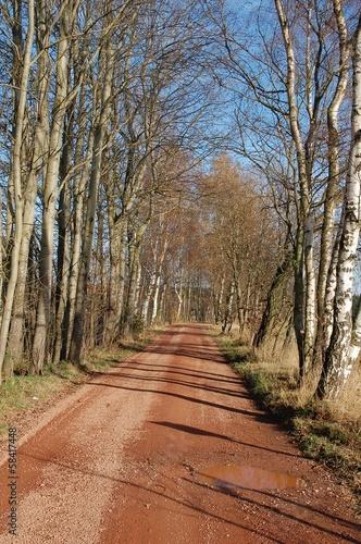 Weg mit Pfütze durch Herbstlandschaft © alisseja