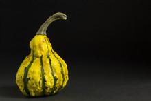 Green Yellow Gourd