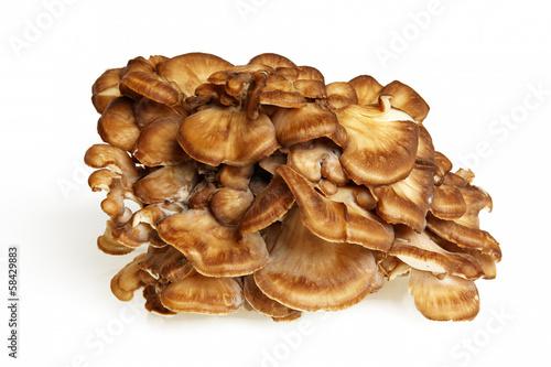 Valokuva  Side View Of Maitake Mushroom