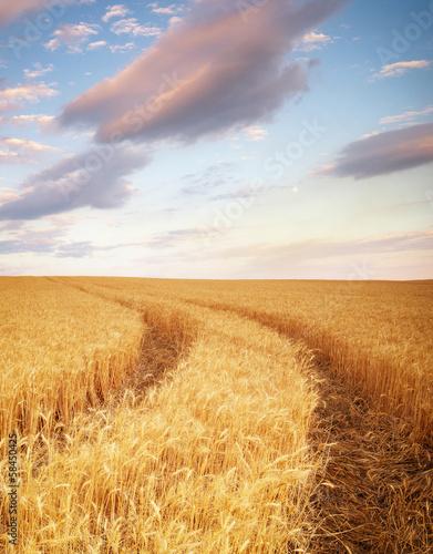 Poster Marron chocolat Meadow of wheat