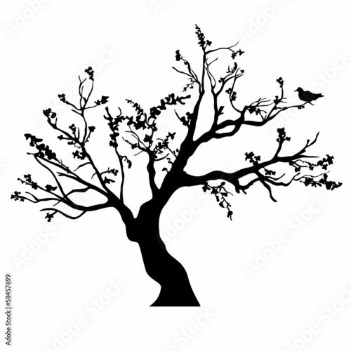 sylwetki-drzewa